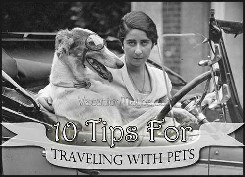 tips for traveling with pets vacation maybe