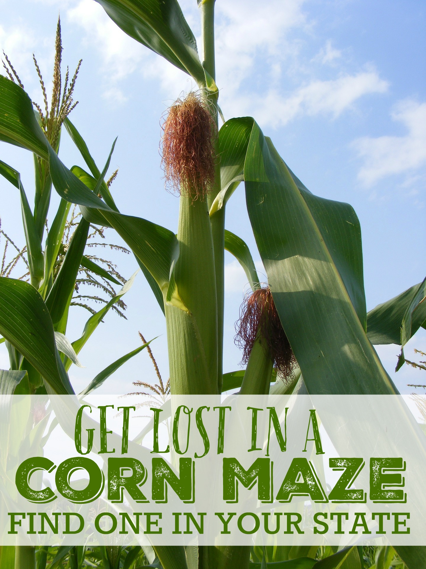 Get lost in a corn maze find one in your state