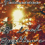 Cades Cove Tennessee – A Leaf Spotter's Dream
