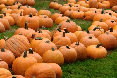 Pumpkin Patches In Central Kentucky