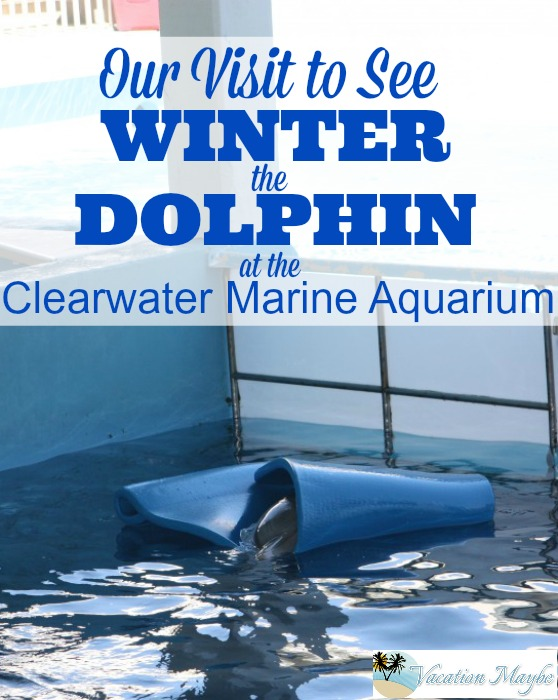You can go visit Winter the Dolphin at the Clearwater Marine Aquarium . Winter and her friends are located just 90 minutes from Orlando.