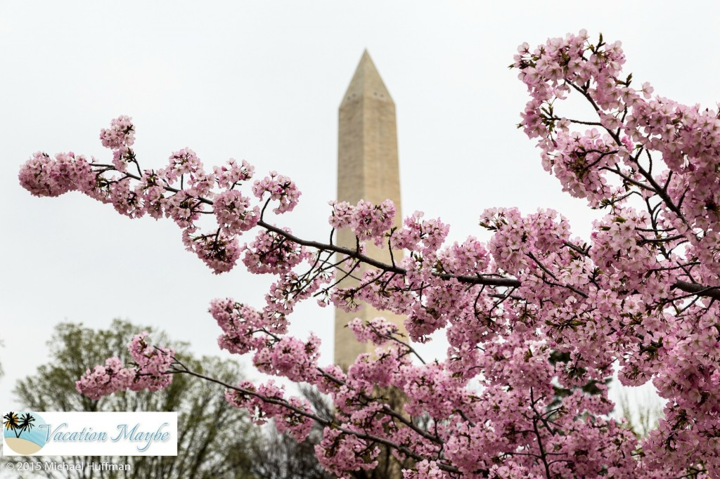 Cherry Blossom Festival and the sites in Washington DC