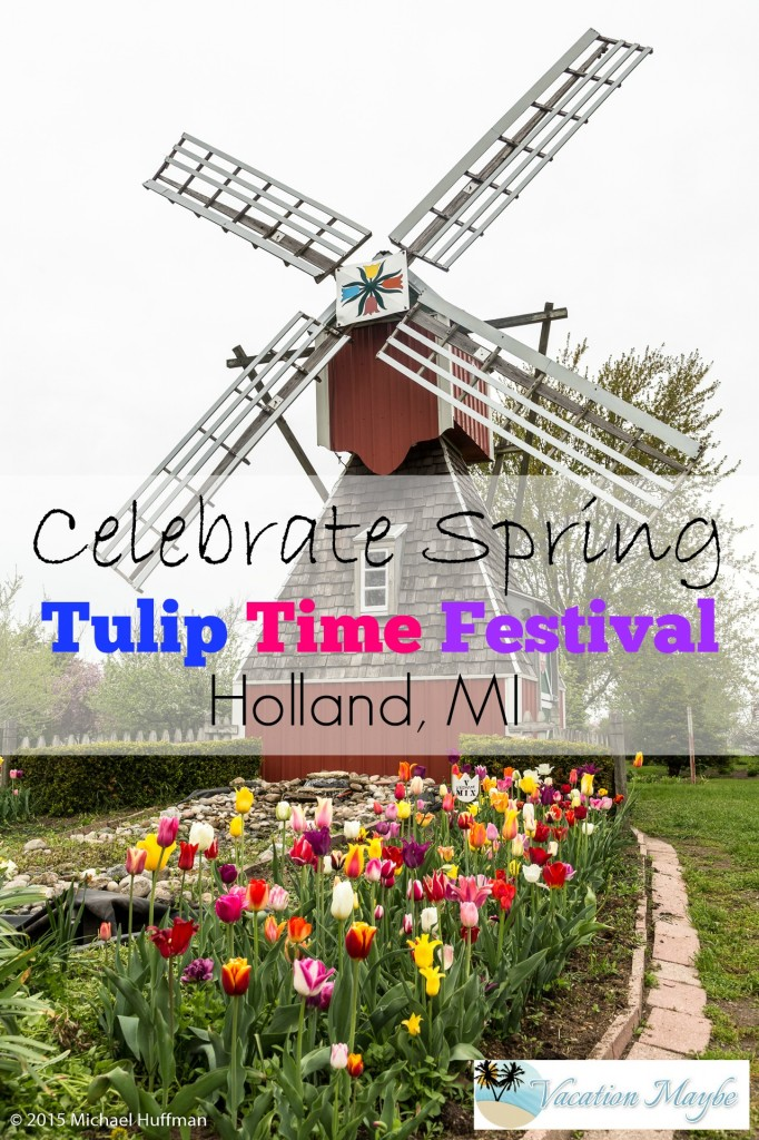 Every year the in the beginning of May in Holland, Michigan a Tulip Festival is held, Tulip Time. Some years the tulips come early, some years they are late