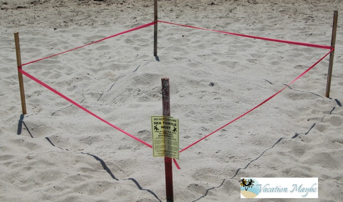 10 Signs you are in LBTS protected turtle nesting areas