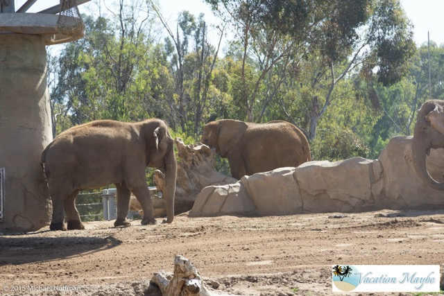 Did you know the San Diego Zoo is more than a Zoo? Besides having Panda, Bears, Elephants and more animals than you can count, it is also one of the most popular botanical gardens and has exhibits that classify it as a museum. A day trip to visit the San Diego Zoo is worth the trip.