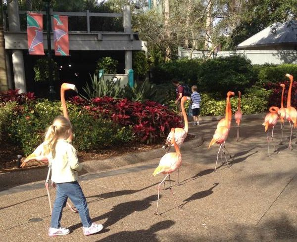 Flamingoes at Sea World Orlando