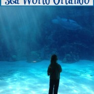 Kids activities you never knew you could do at Sea World Orlando