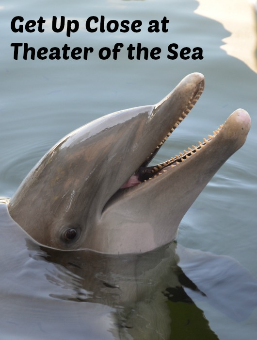 Theater of the Sea pic