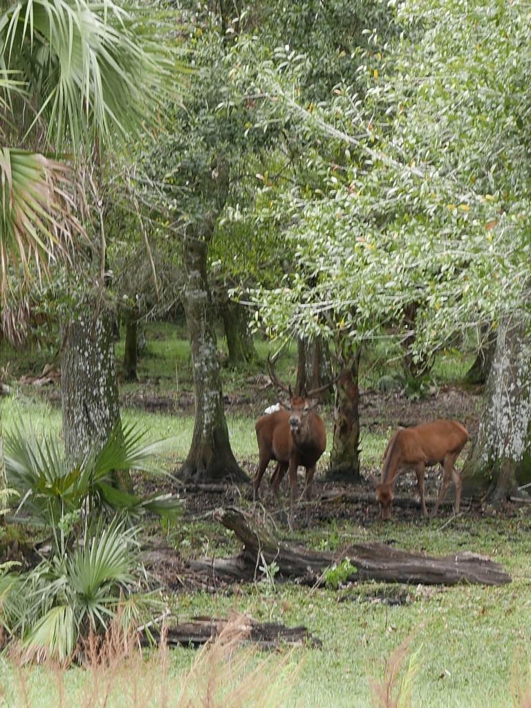 Billie Swamp Safari Big Cypress Seminole Indian Reservation