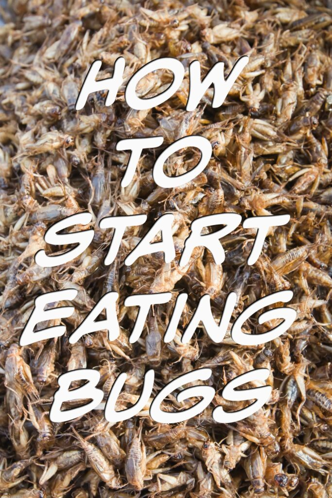 How to start eating bugs