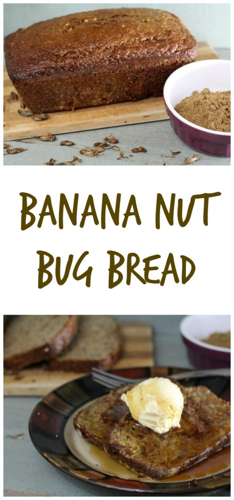 So you want to start eating bugs or maybe you dont realize that you need to start eating bugs Crickets are a sustainable and environmentally friendly source of proteinc calcium and iron Start eating bugs by making our banana nut bg bread recipe