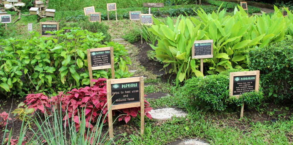 Learn all about the traditional medicinal plants in the Philippines at the Nurture Farmacy