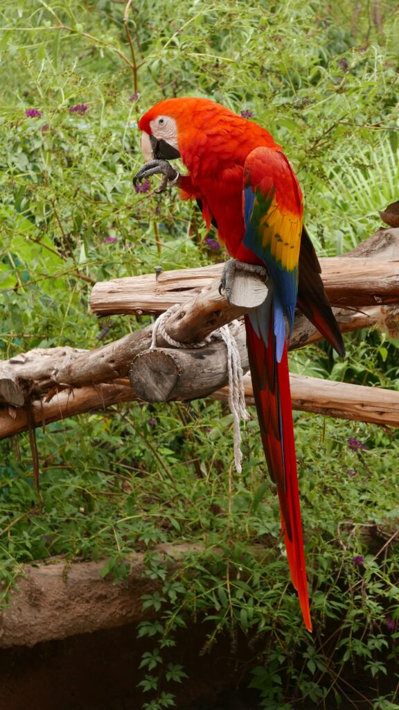The Abilene Zoo hosts over 1000 animals