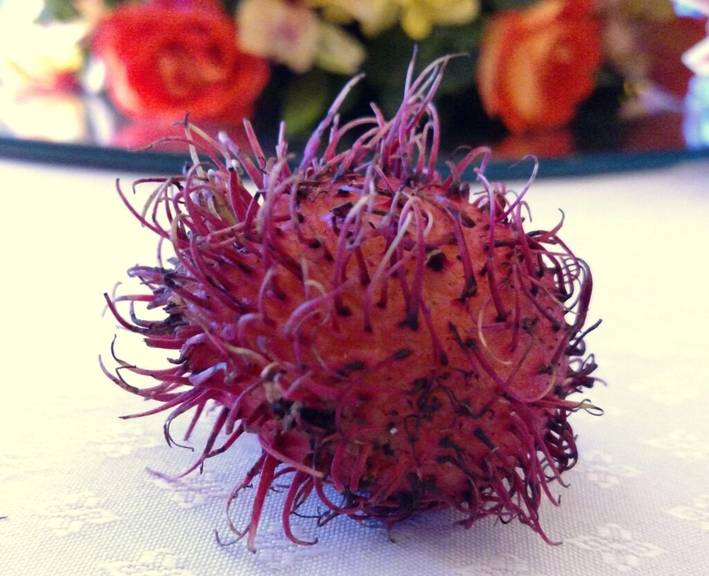 Rambutan is one of my new favorite fruits