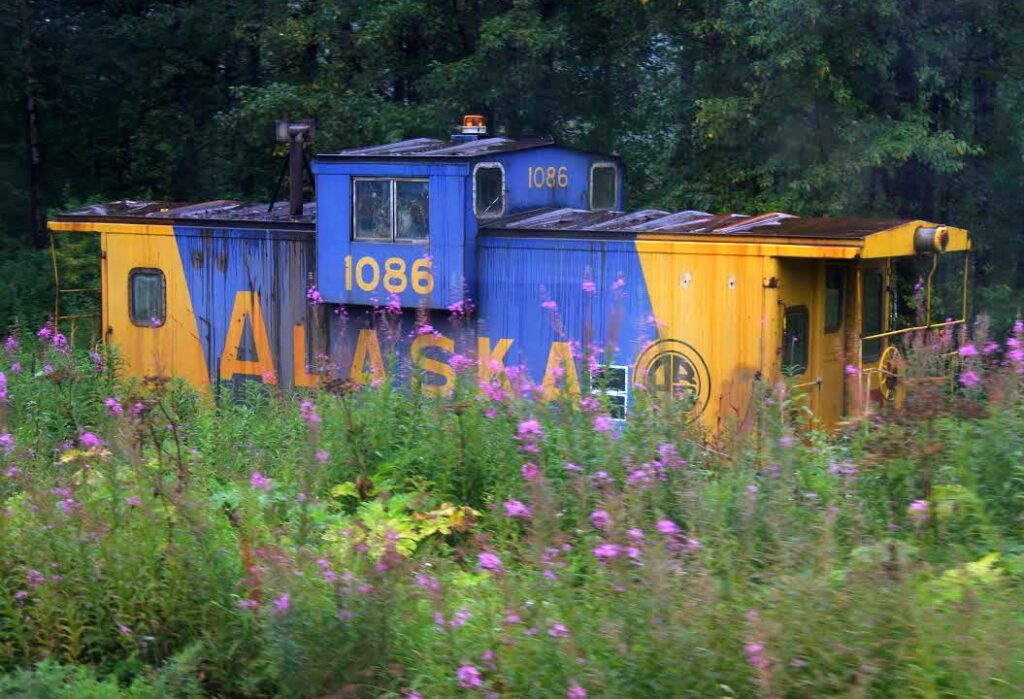 Nestled by a field of purple flowers, this train car symbolizes the hidden perhaps unknown is a better word, beauty of Alaska