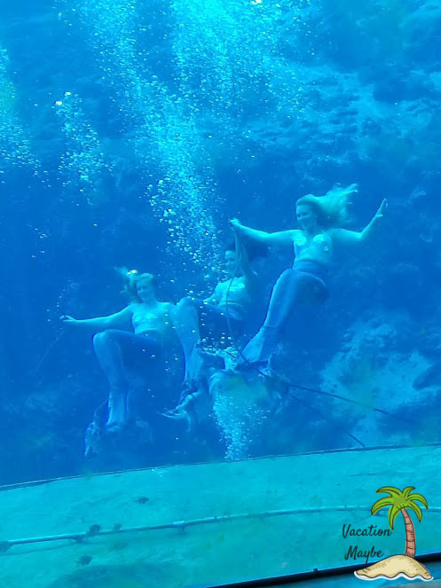 Do you love mermaids? Have a fun family time at Weeki Wachi Springs. A family destination in Florida with mermaid shows, kayaks, water fun and more