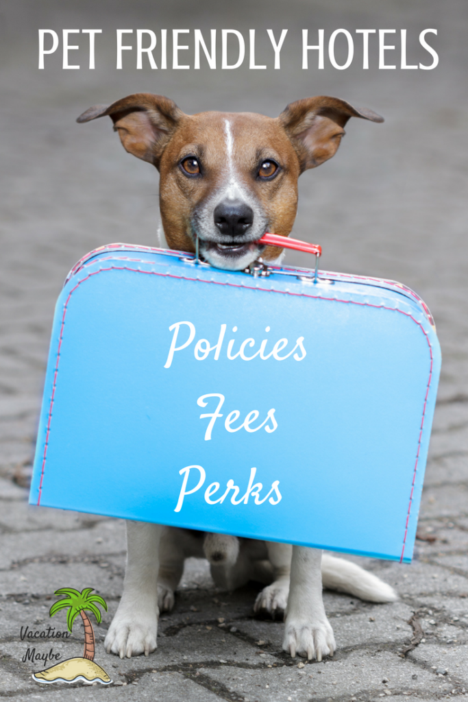 Pet Friendly Accommodations are a must when traveling with the family dog or cat! Check out our tips for finding the best locations for your next family vacation.