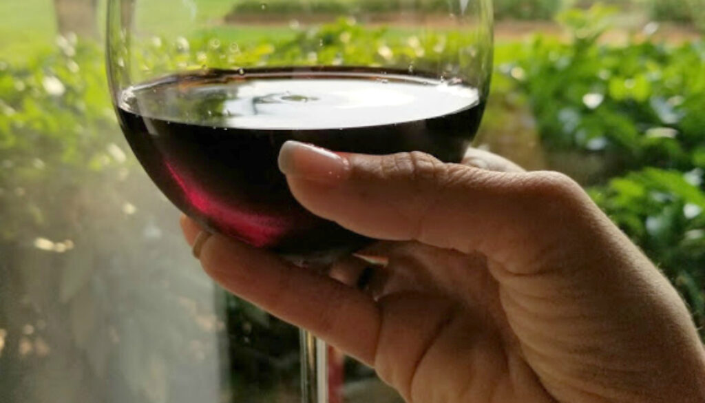 Do you love wine? Discover the best wineries in North Carolina
